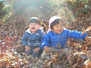 Leaves leaves leaves!!